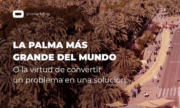 La Palma Mas Grande del Mundo